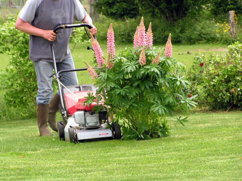 Gärtner mit Rasenmäher beim Rasen mähen.