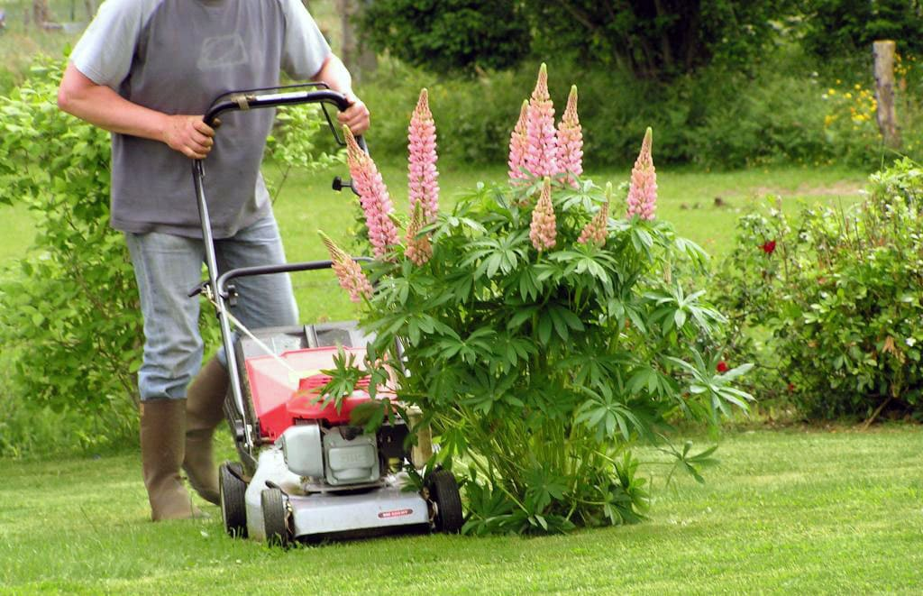 Garden services - garden maintenance, lawn mowing.