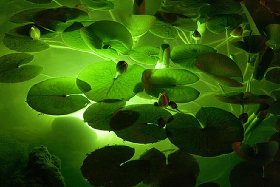 Unterwasserbeleuchtung im nächtlichen Gartenteich.