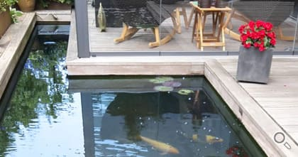 Formal Koi pond with Genesis pond filter for clear water.