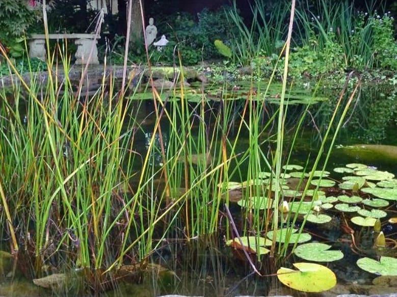 Romantic garden pond with antique stone bench.