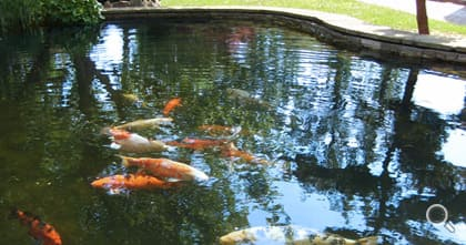Beautifully curved koi pond with a brick sandstone lining.